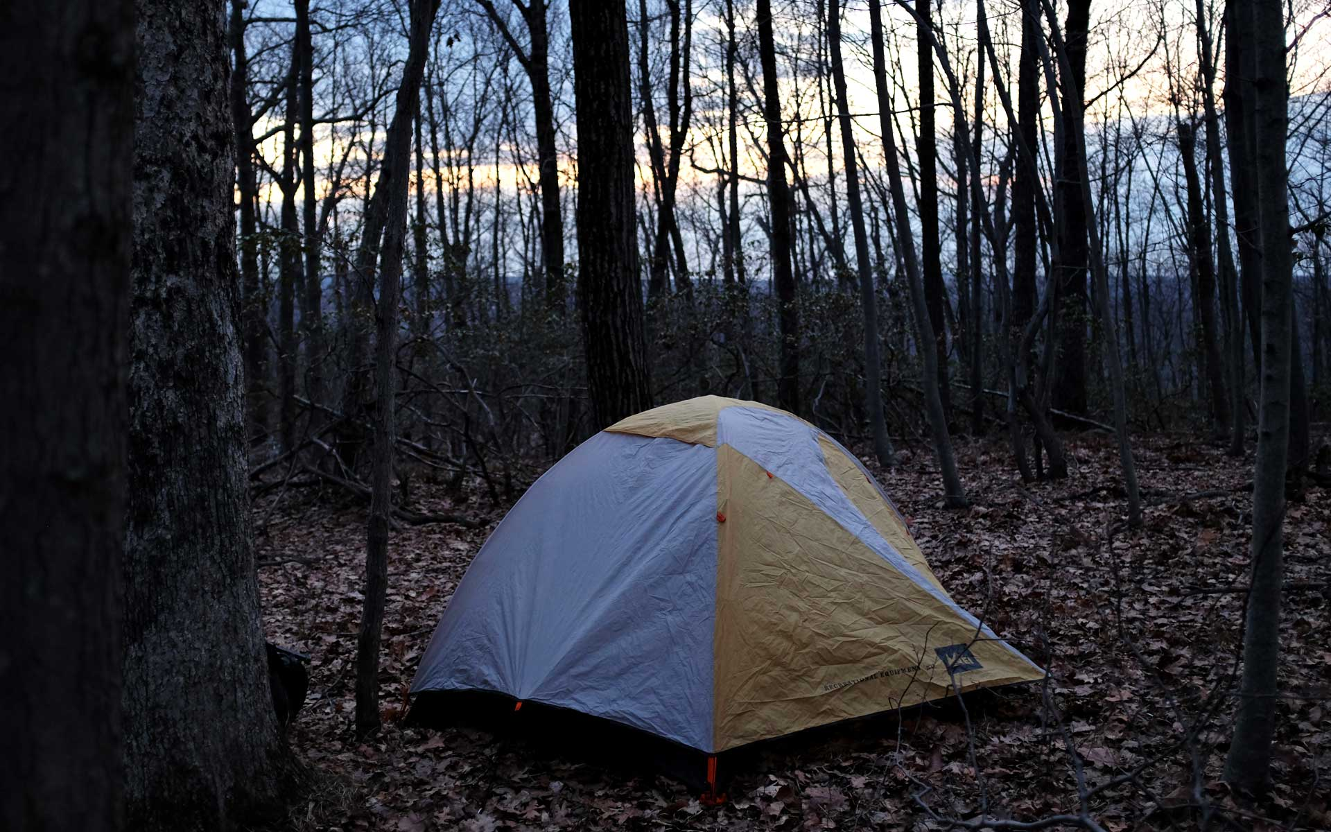 Photograph: the tent, set up in between some trees, on a bed of dry leaves at sunset.