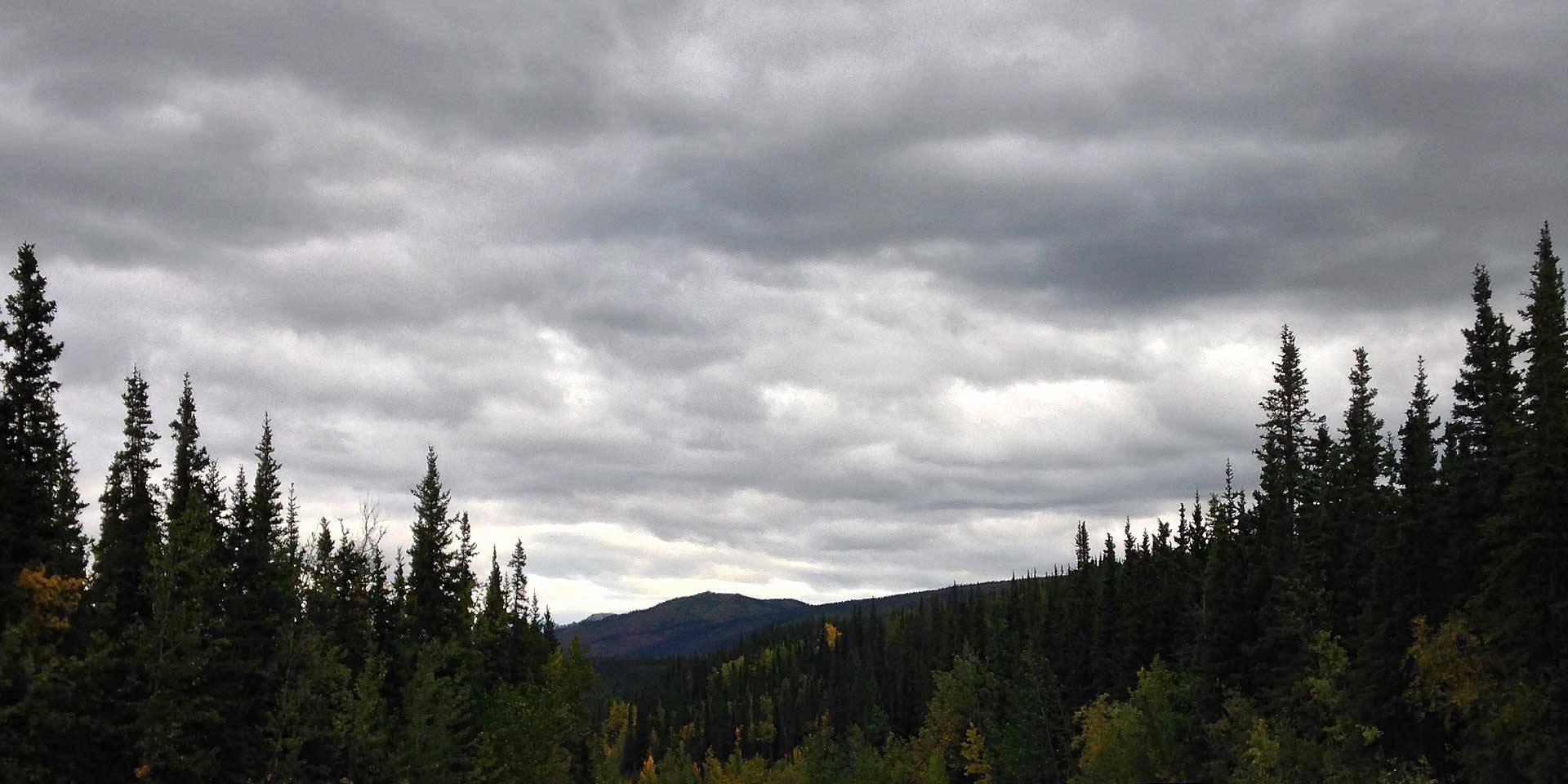 Photograph: Rolling gray clouds block out any hint of blue sky above the pine trees and mountains near the Denali National Park visitors' center.